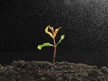 Grön planta med ånga Royaltyfri Bild