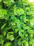 Grön plast-växt Arkivfoto
