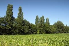 Grön plats Fotografering för Bildbyråer