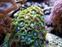 grön polyp Arkivbilder