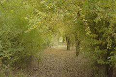 Grön portal Royaltyfria Bilder