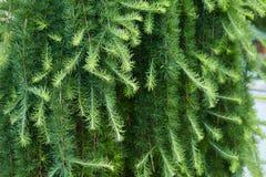 Grön prydlig groving i trädgården utomhus royaltyfri fotografi