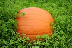 grön pumpayellow för gräs Royaltyfri Fotografi