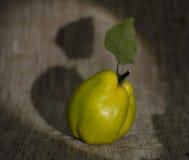 grön quince Arkivfoto