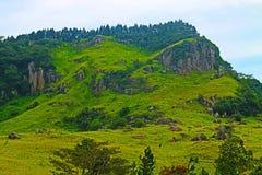 Grön rainforestkulle i Sri Lanka arkivbilder