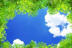 Grön ram för sidor för trädfilialer på bakgrund för blå himmel och molnnatur arkivbilder
