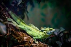 Grön reptil i den Frankfurt zoo arkivbilder