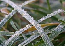grön rimfrost för gräs Arkivfoton
