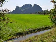 Grön risfält framme av det avlägsna berget Royaltyfria Bilder