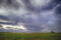 Grön risfält i sommar med molnigt Arkivbild
