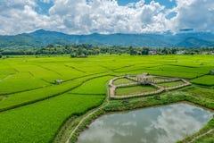 Grön risfält med backgroundBamboobron för natur och för blå himmel på grön risfält med bakgrund för natur och för blå himmel Royaltyfri Foto