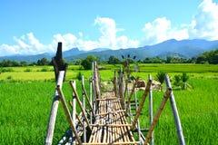 Grön risfält med den thai träbron Arkivfoto