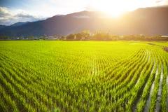 Grön risfält med molnet och berget Royaltyfria Bilder