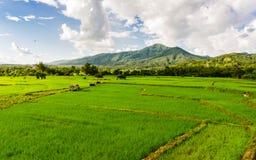 Grön risfält och berg i det nan landskapet Fotografering för Bildbyråer