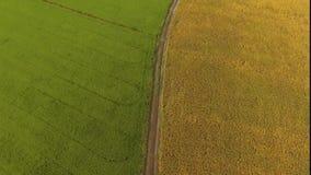 Grön risfält och guld- risfält i Thailand lantgård arkivfilmer