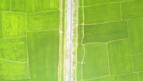 Grön risfält och järnväg surrsikt För gräsplanris för flyg- sikt koloni i asiatisk bygd jordbruks- industri arkivfilmer