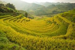Grön risfält på terrasserat Arkivfoton