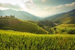 Grön risfält på terrasserat Royaltyfria Bilder