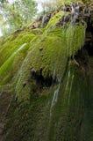 Grön rock Royaltyfria Bilder