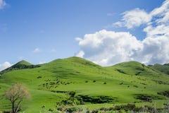 Grön rullande jordbruksmark arkivbilder