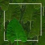 Grön sömlös bakgrund från lövverk Royaltyfri Bild