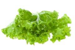 grön sallad Royaltyfri Foto