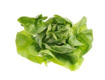 grön sallad Arkivbild