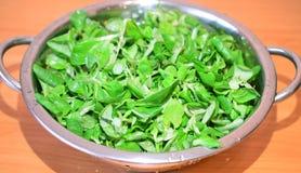 grön sallad Arkivbilder