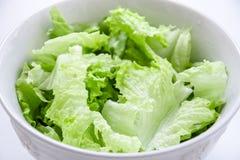 grön sallad Fotografering för Bildbyråer
