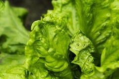 grön sallad för bakgrund arkivfoton