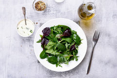 Grön sallad med blandade sidor Royaltyfri Fotografi
