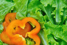 Grön sallad med paprika Royaltyfri Fotografi