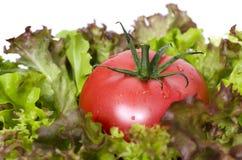 Grön sallad och tomat på plattan Royaltyfria Bilder