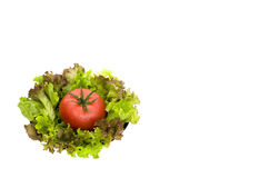 Grön sallad och tomat på plattan Arkivbilder