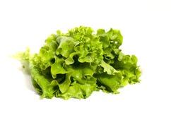 Grön sallad på vitbakgrund Arkivfoton