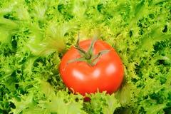grön salladtomat Fotografering för Bildbyråer