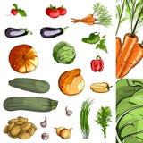 Grön samling för nya grönsaker Arkivfoto