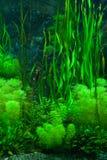 grön seaweed Arkivfoto