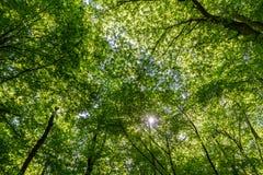 grön seende sun för strålskog upp Arkivfoton