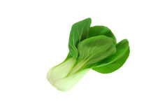 grön shanghai grönsak Royaltyfria Bilder