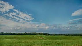 Grön sida för utvändigt land för fält arkivfoto