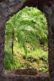 grön sikt Fotografering för Bildbyråer