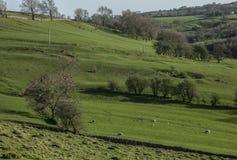 Grön sikt - dalar och ängar, maximalt område, England, UK Royaltyfri Fotografi
