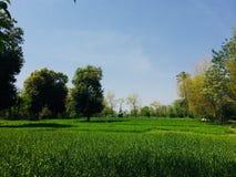 Grön sikt för veteskördlandskap med gröna träd royaltyfri fotografi