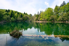 Grön sjö Arkivfoto