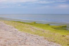 Grön sjösida Fotografering för Bildbyråer