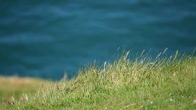 Grön sjösida för gräs mycket Arkivbild