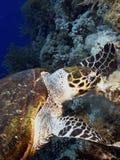 grön sköldpadda fotografering för bildbyråer