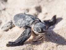 grön sköldpadda Arkivbild