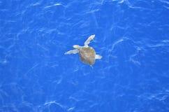 Grön sköldpadda som reser till och med Stilla havet royaltyfria foton